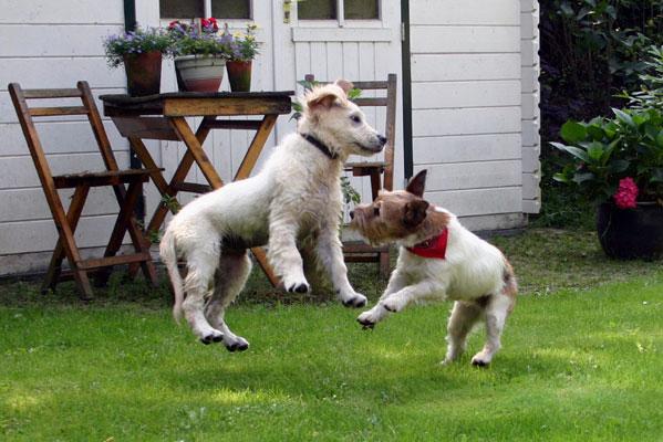 L'importanza della socializzazione canina