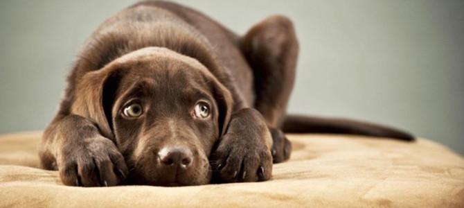 Il Cane e la paura dei botti di Capodanno. Cosa fare?