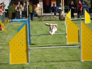 Dog Agility Training New Hampshire