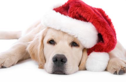 Caro Babbo Natale, vorrei…