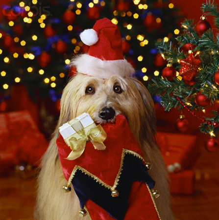 Regali di Natale. Un promemoria per tutti.