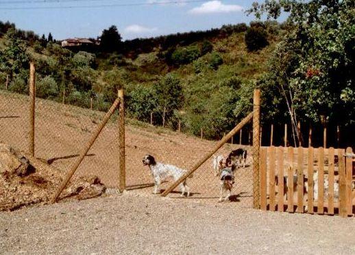 Pensioni Per Cani Vicino Villa Rosa Abruzzo