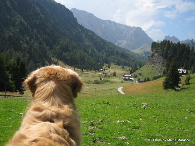 Best Dog Hiking Pack