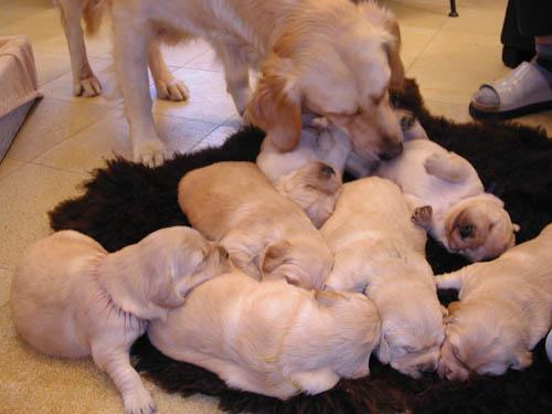 Bufala: Cuccioli da adottare perché a rischio soppressione