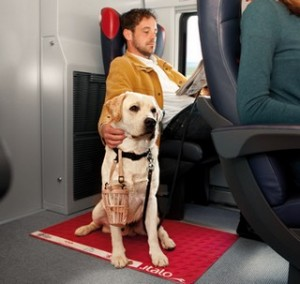Viaggiare con il cane su Italo