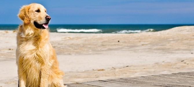 Cani in spiaggia, cosa dice la legge? Facciamo il punto