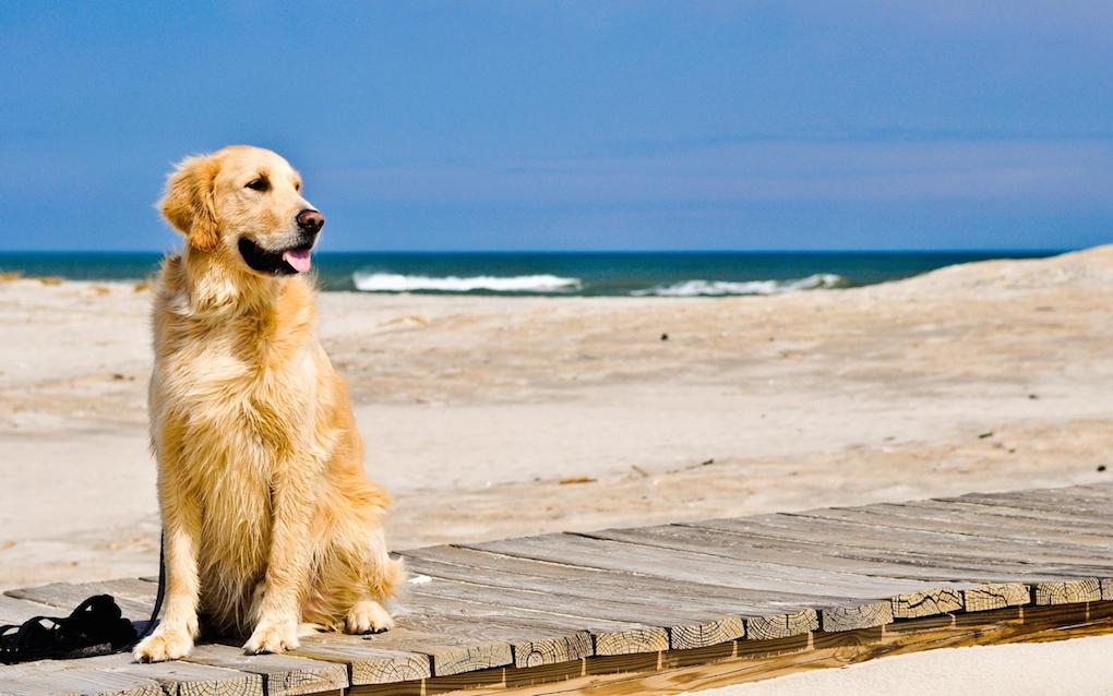 cani spiaggia legge
