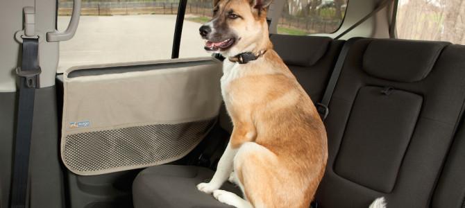 Il cane in auto. Cosa dice il Codice della Strada?