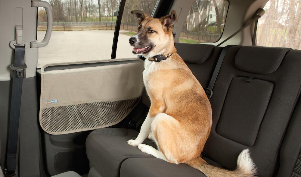 cane auto codice stradale