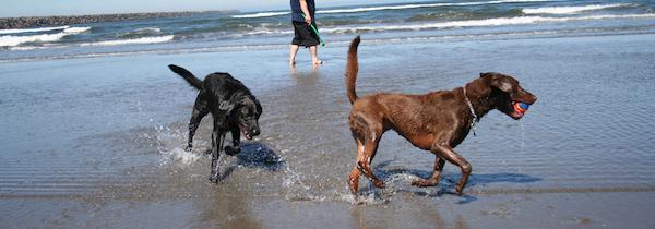 cani spiaggia toscana