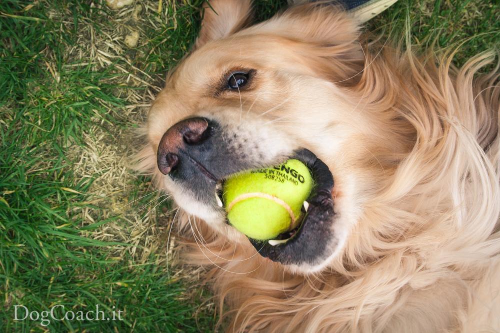 importanza gioco cane
