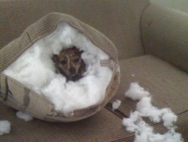 cane casa solo3