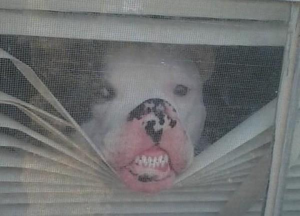 cane casa solo5