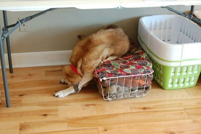 cane solo casa17