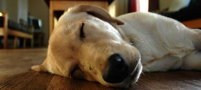 24 cose che fa il tuo cane quando è solo in casa
