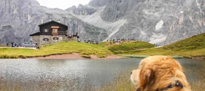 Cani e rifugi di montagna. Quali sono le regole?