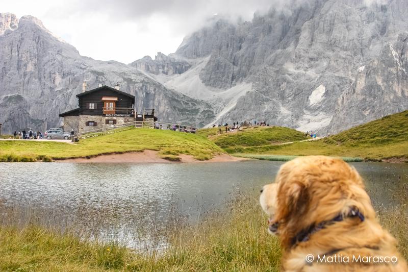 Cani e rifugi di montagna quali sono le regole dog coach for Rifugio in baita di montagna