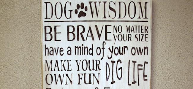 5 cose che puoi imparare dal tuo cane