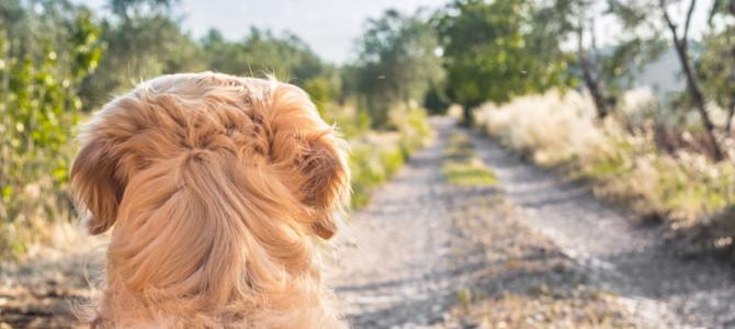 10 cose che il tuo cane ti direbbe se potesse parlare