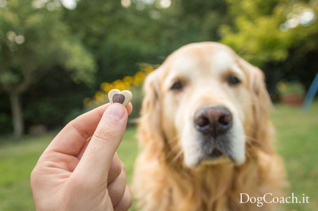 premiare cane cibo dogcoach