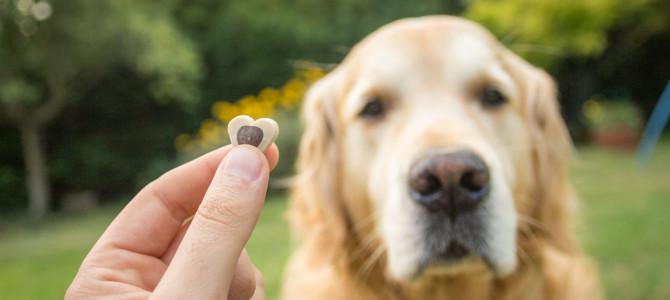 Premiare il cane con il cibo. Giusto o sbagliato?