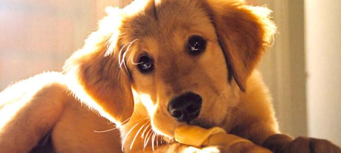 5 idee regalo (economiche) per chi ha un cane