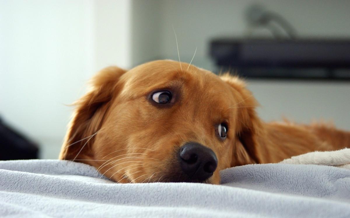 cane attività contro noia