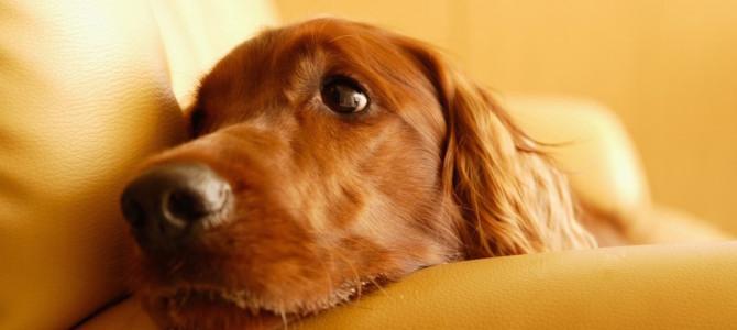 7 parole che con l'arrivo di un cane in casa cambiano significato