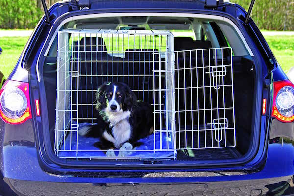 cane auto kennel