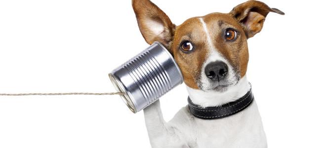 I cani capiscono le nostre parole (e noi fraintendiamo spesso le loro)