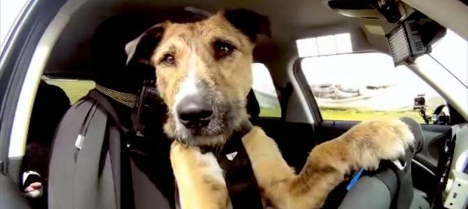 Come trasportare il cane in auto