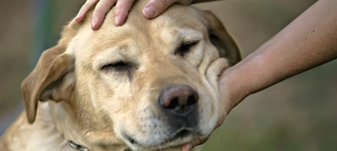 10 cose che fai e che il tuo cane detesta