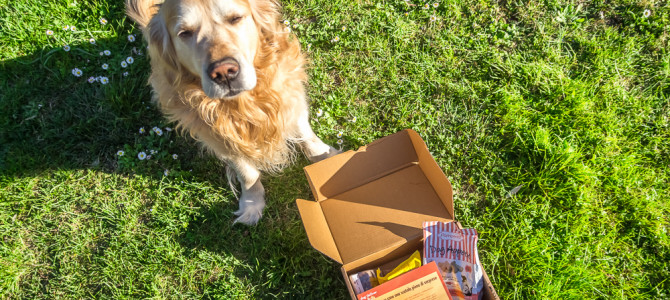 DogDeliver una scatola piena di sorprese per il tuo cane