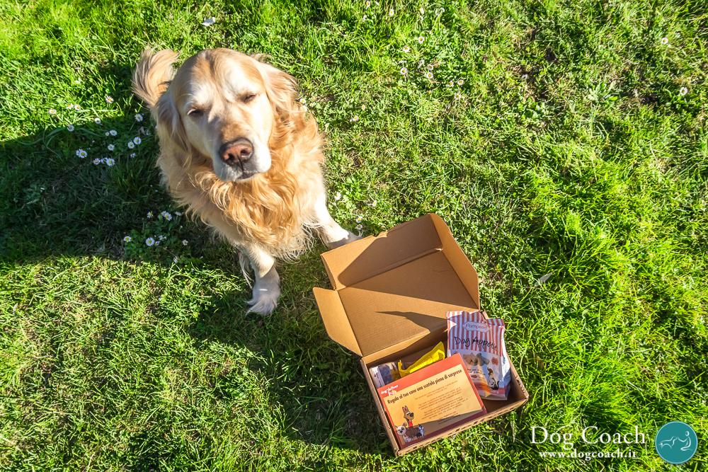 dogcoach dogdeliver regalo 1