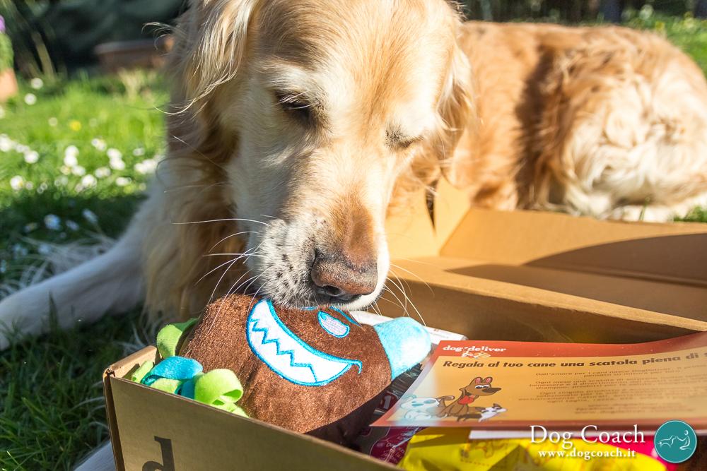 dogcoach dogdeliver regalo 2