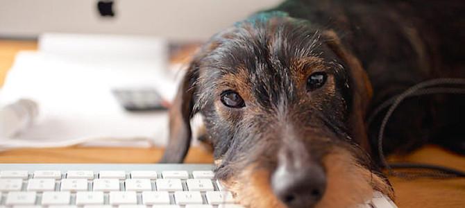 Detrazioni fiscali per chi ha un cane. Calcolo e documentazione necessaria