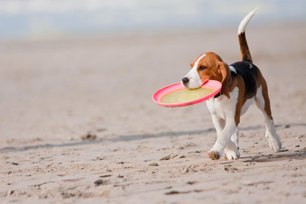 spiagge cani italia