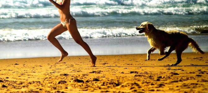 In spiaggia col cane: diritti e doveri