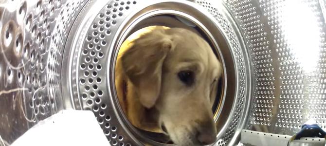 Nasconde una telecamera nella lavatrice, ecco cosa fa il suo Golden