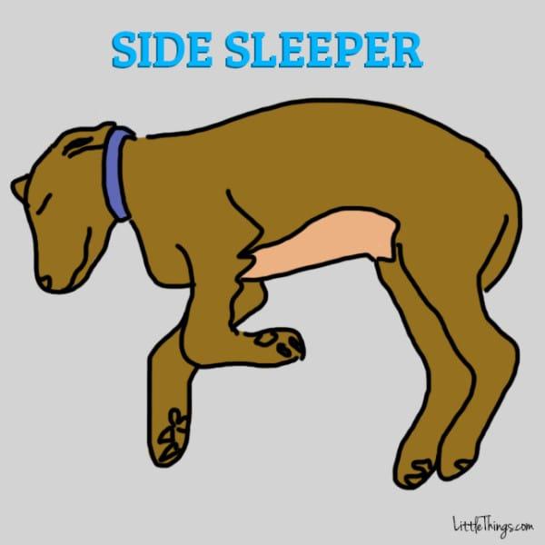 cane-posizione-dormire-lato