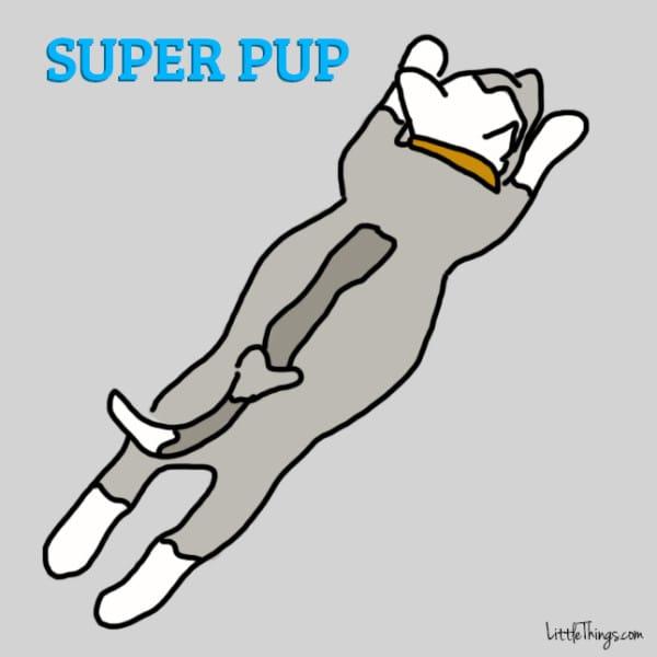 cane-posizione-dormire-superman