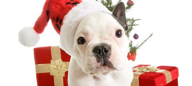 9 regali per il tuo cane e 1 per te!