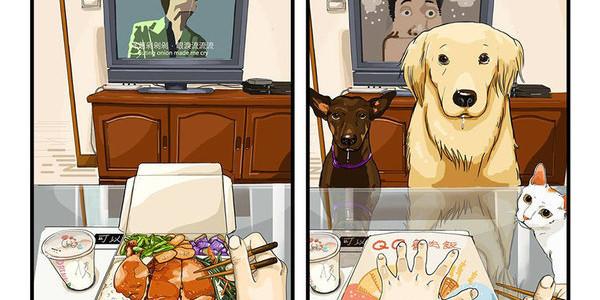 La vita prima e dopo aver preso un cane